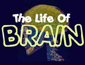 The Life of Brain